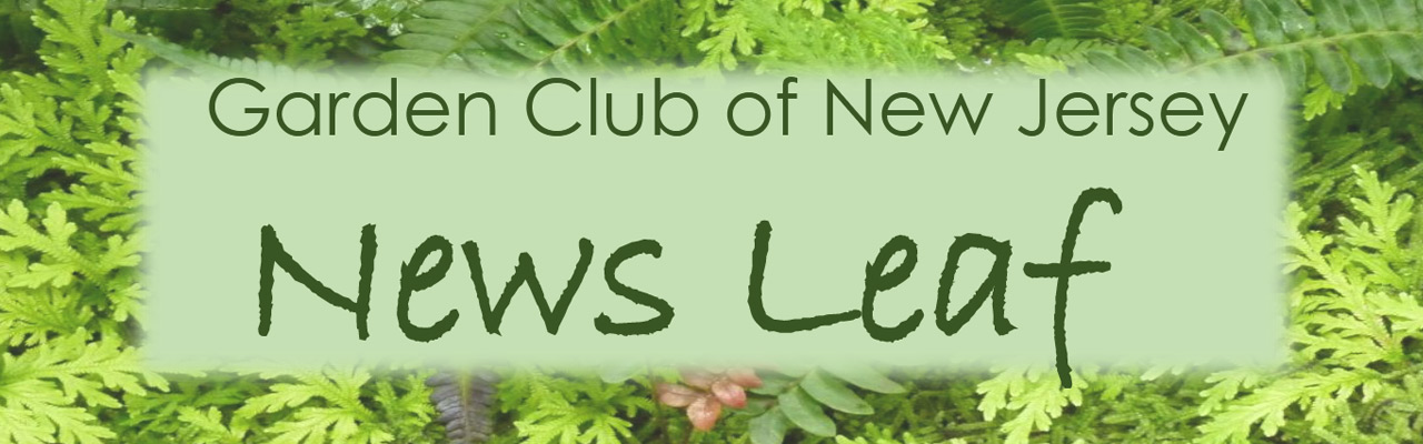 News Leaf newsletter